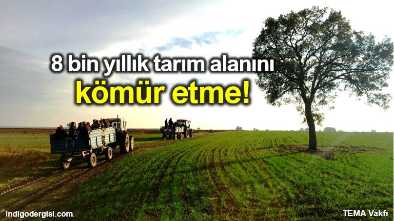 TEMA Vakfı: 8 bin yıllık tarım alanını kömür etme!