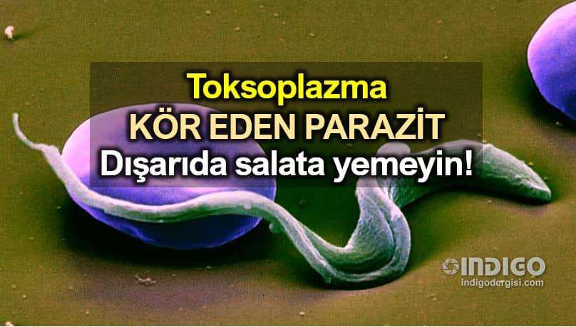 Toksoplazma: Kör eden parazit! Dışarıda salata yemeyin!