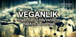 Veganlık: İnsan harici hayvanların hakkını savunmak