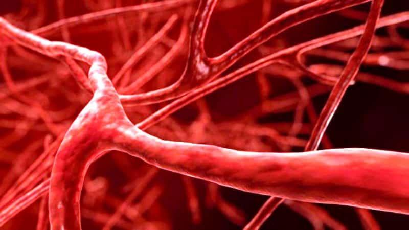 Damarlar ve kan dolaşımı hakkında 10 ilginç bilgi varis