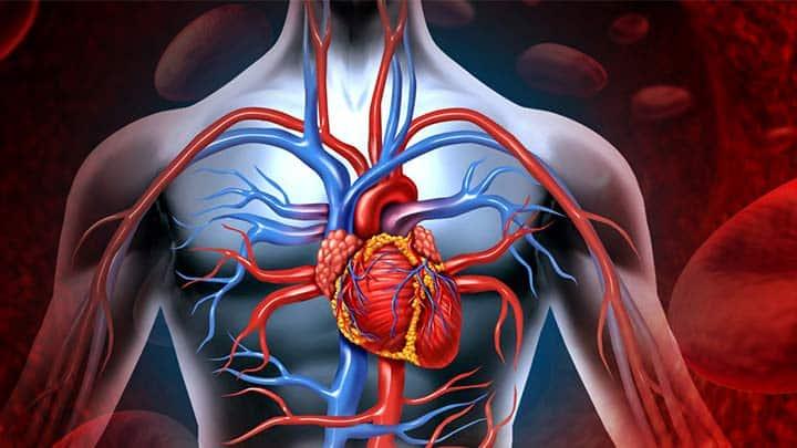 Damarlar ve kan dolaşımı hakkında 10 ilginç bilgi