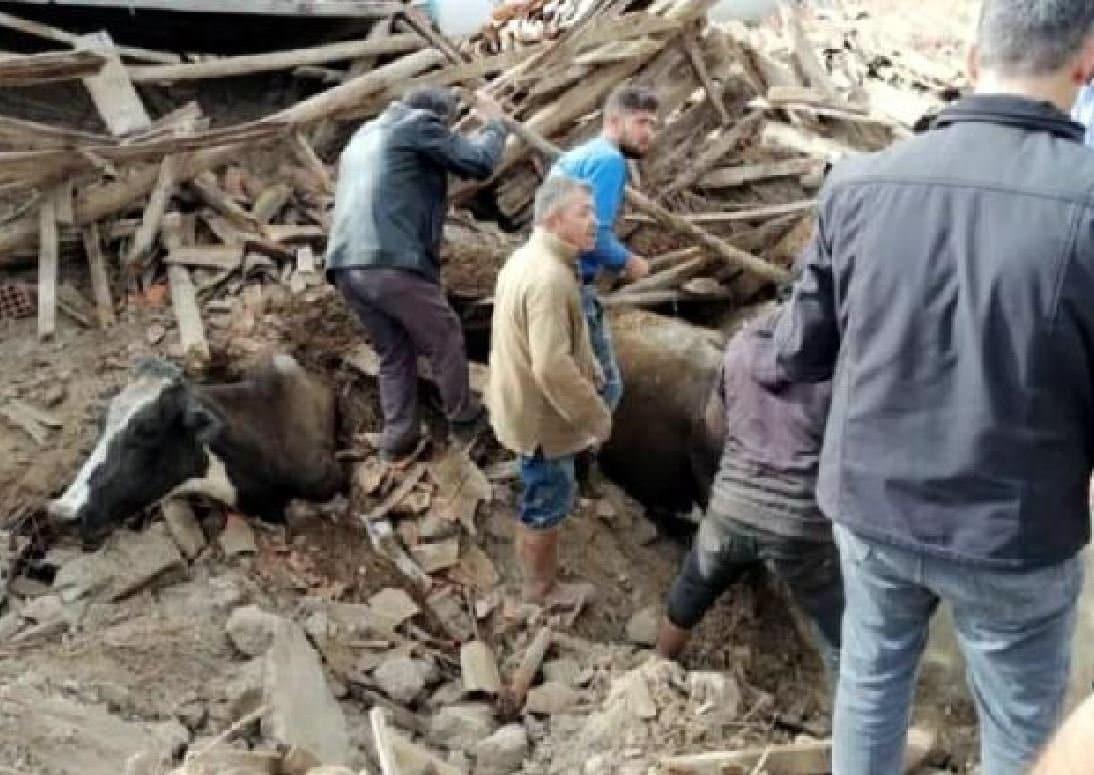 15 hayvan enkaz altında kaldı deprem