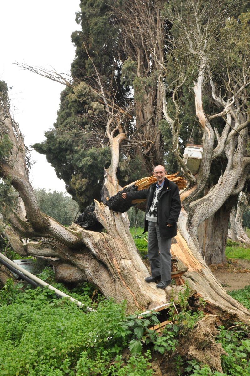 ağaç çevre doğa katliamı iznik türkiye