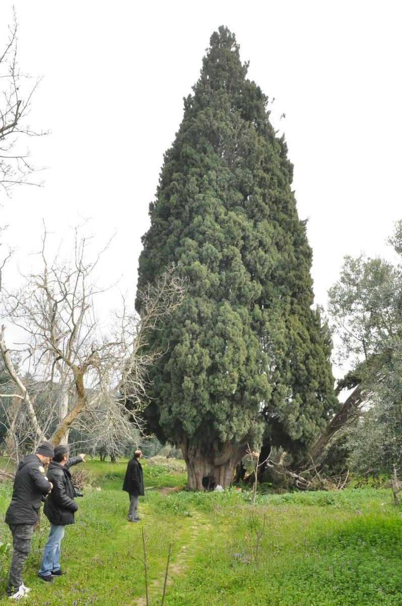 Bursa İznik