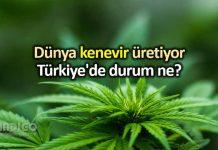 Dünyanın devleri kenevir üretiyor: Türkiye de durum ne?