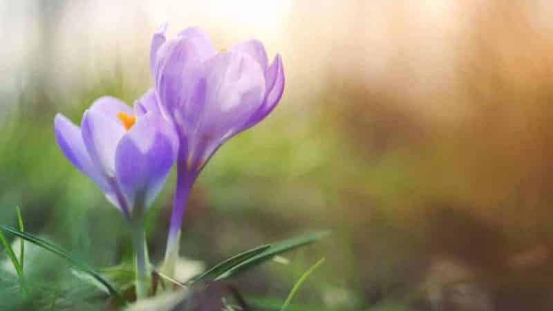 bahar ekinoksu