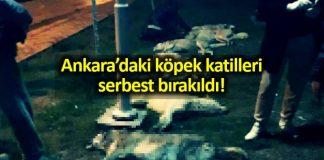 Ankara köpek katilleri serbest bırakıldı!