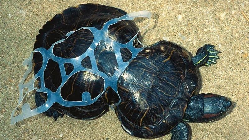 Greenpeace: Plastik atıkların yeni adresi Türkiye, kontrolsüz şekilde çöp ithal ediyor