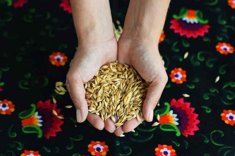 siyez buğdayı belgeseli