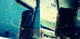 İstanbul Havalimanı arılar bastı!