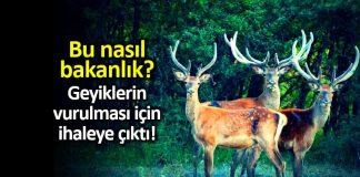 Tarım ve Orman Bakanlığı geyik ihalesi: Vurana 14 bin TL verilecek
