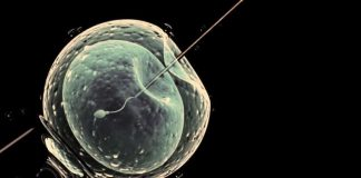 Tüp bebek tedavisi hakkında en çok merak edilen 10 soru