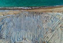 Caretta Caretta kaplumbağa yuvalarının bulunduğu sahili tarla gibi sürdüler! belek antalya serik