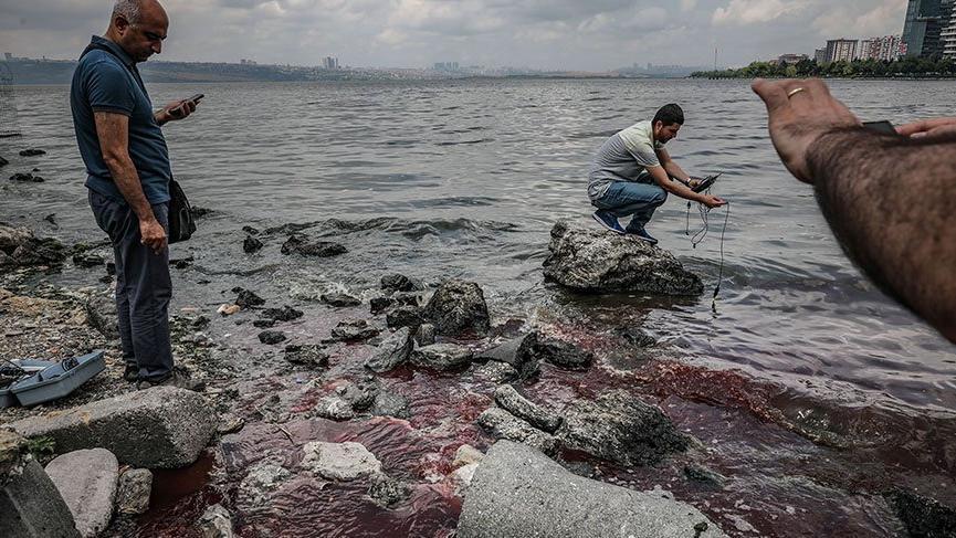 küçükçekmece gölü balık ölümleri