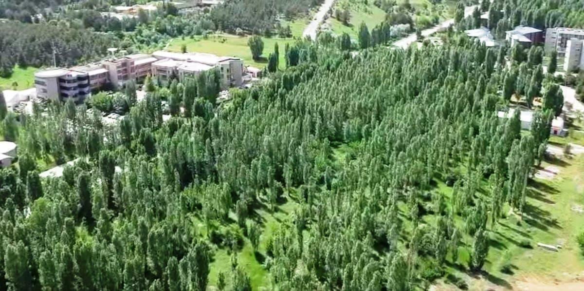 ODTÜ'deki ağaç katliamı havadan böyle görüntülendi