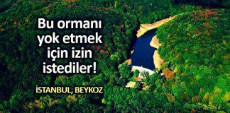 istanbul beykoz güney kuzey kirazlı 553 villa uğruna 5 bin ağaç katletmek için izin istendi