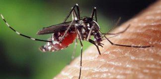 Bilim insanları sivrisinekleri yok edecek yöntem geliştirdi