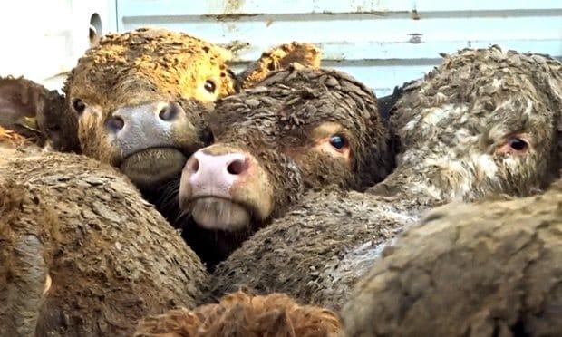 Vegan olmak: Sömürüye karşıyız, ailecek veganız!
