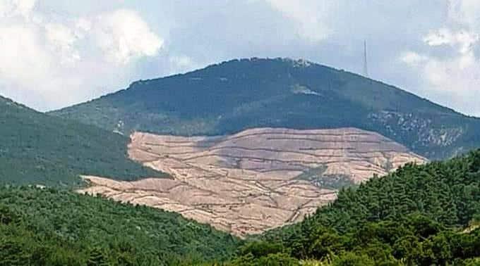 Kaz Dağları'nda resmi kaynaklara göre 14 bin, çevre örgütlerine göre 195 bin ağaç kesildi!