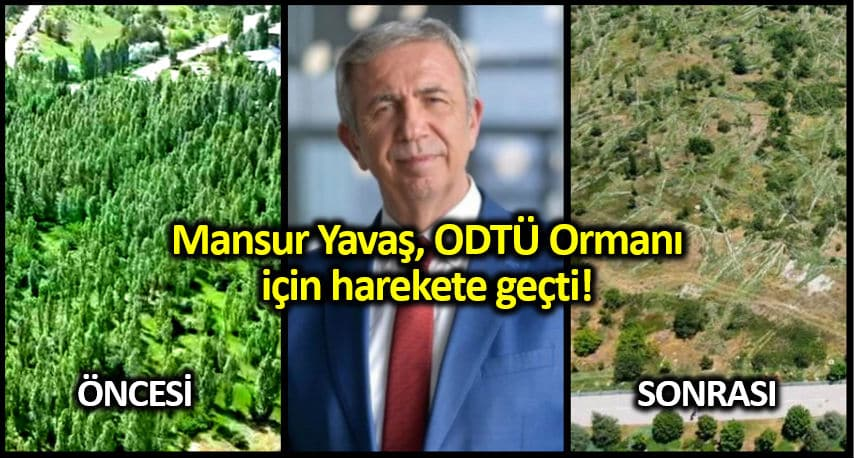 Mansur Yavaş ODTÜ ormanı ağaç katliamını önlemek için devreye girdi!