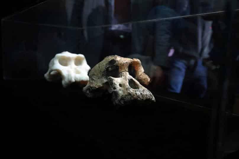 MRD ve Lucy ilk insanların atasına ait dönüm noktası niteliğindeki iki fosil