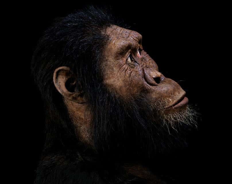 ilk insan