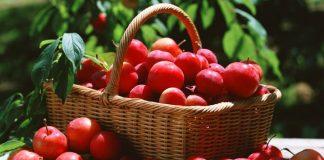 Kırmızı erik faydaları: Yaşlanma karşıtı, diyet dostu!