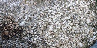 Sivas 55 milyon yaşında deniz canlısı fosil bulundu!