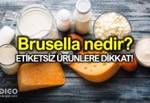 Brusella nedir? Belirtileri neler? Tedavisi nasıl?