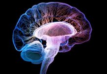 Hipokampus ile Alzheimer ilişkisi: Uykusuzluk ve depresyona dikkat!