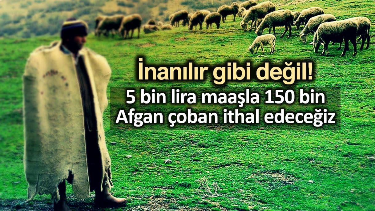 5 bin lira maaşla 150 bin Afgan çoban ithal edeceğiz!