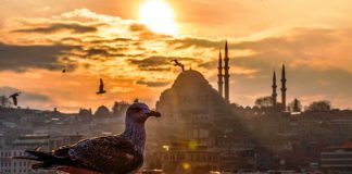 Greenpeace: İstanbul da son 40 yılın en sıcak Kasım ayını yaşıyoruz, hiç doğal değil