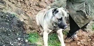 Hatay da zehirlenen köpek ile ilgili soruşturma başlatıldı