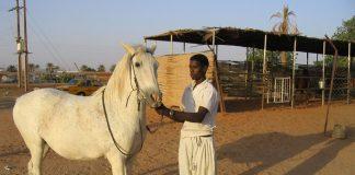 Sudan dan at eti gelecek!