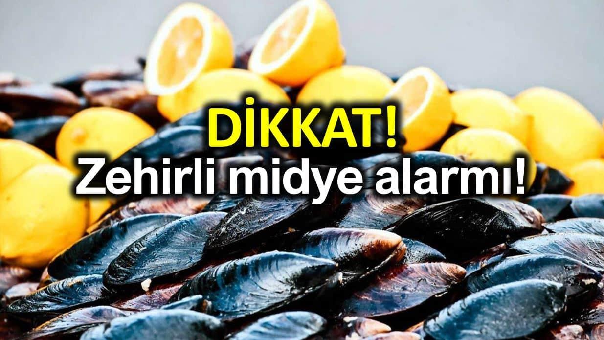 Zehirli midye alarmı: Rota virüs, hepatit, kolera yapıyor!