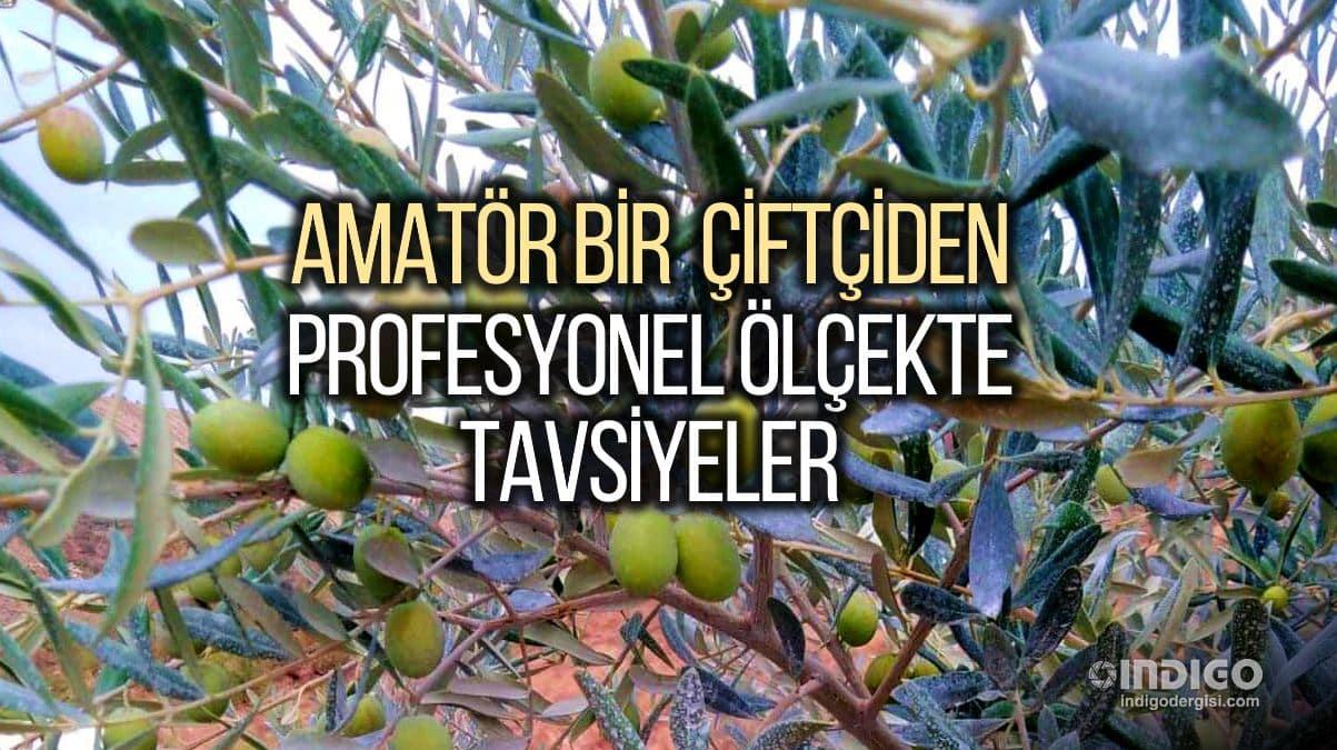 Organik tarım: Amatör bir çiftçiden profesyonel ölçekte tavsiyeler