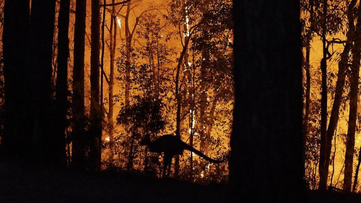 Avustralya yangınlarda son durum ne?