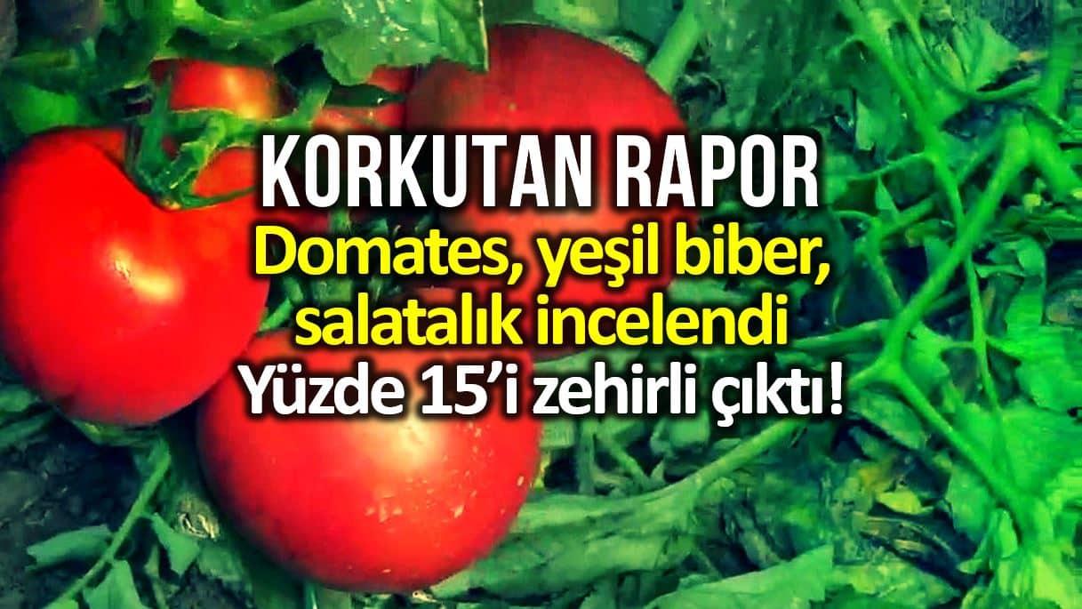 greenpeace akdeniz Türkiye de salatalık, domates ve biberin yüzde 15 pestisit içeriyor!