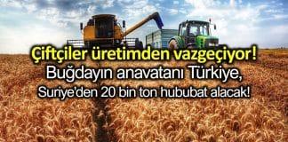 TMO, Suriye den 20 bin ton hububat alacak!