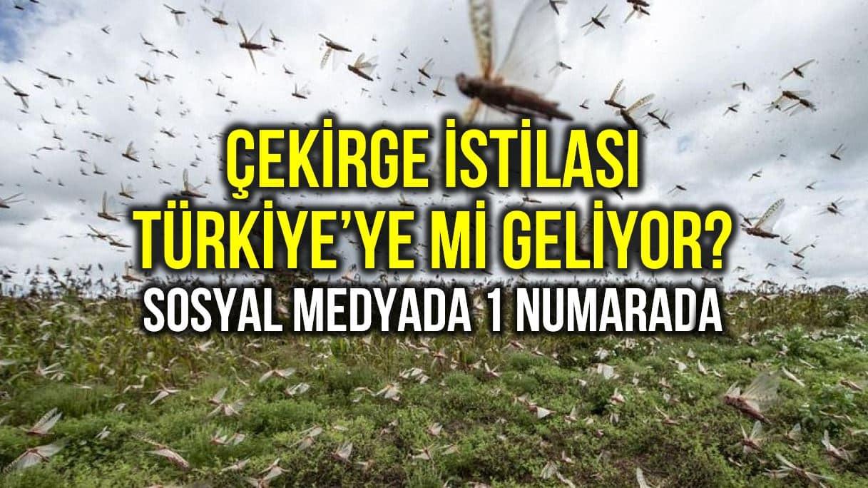 Çekirge istilası Türkiye ye mi geliyor? Sosyal medyada bir numarada!