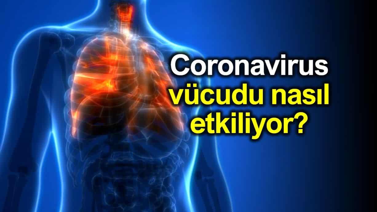 Corona virüsü (Covid-19) vücudu nasıl etkiliyor?
