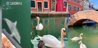İtalya karantinaya alınınca doğal hayat yeniden canlandı!