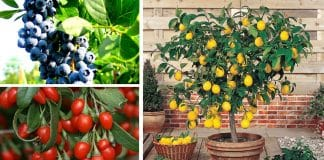 Kaliteli meyve fidanı satın almanın doğru adresi ali botanik