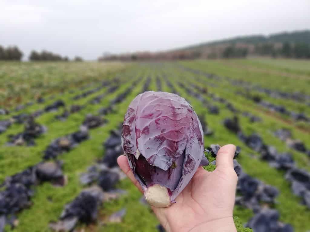 Pestisit = tarım zehiri