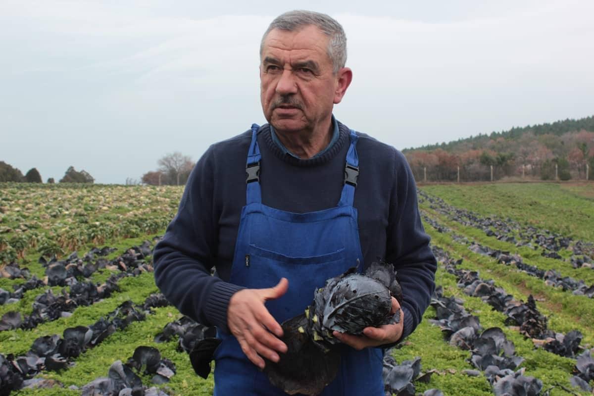 Çiftçi uyarıyor: Otu, böceği öldüren pestisit; insanı da öldürüyor!