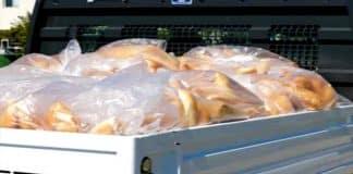 CHP li Muğla Büyükşehir Belediyesi'ne ekmek dağıtma yasağı