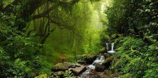 Doğa fısıldıyor: Hatırla insan!
