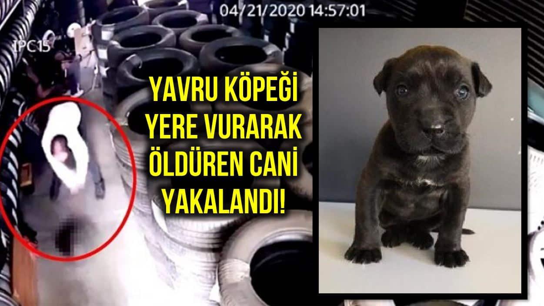 Dora isimli yavru köpeği yere vurarak öldüren cani yakalandı!