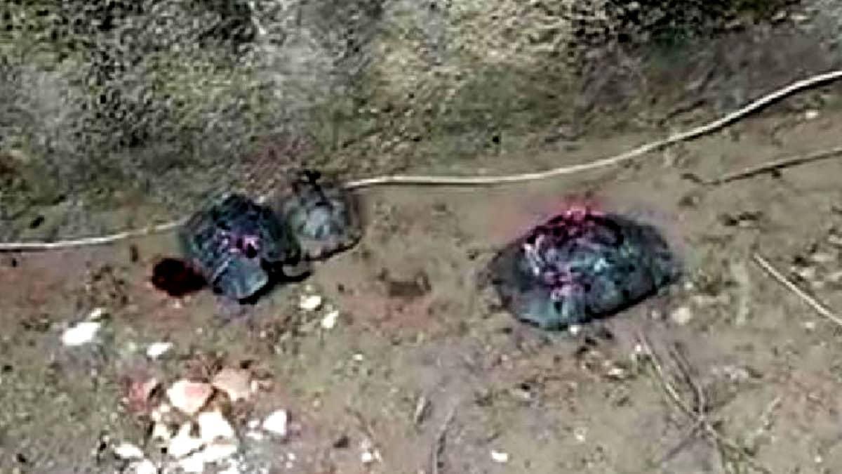 Alanya da çok sayıda kaplumbağa taşla ezilerek öldürüldü