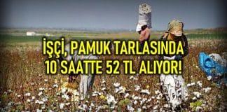 İşçiler pamuk tarlasında 10 saatte 52 TL alıyor!